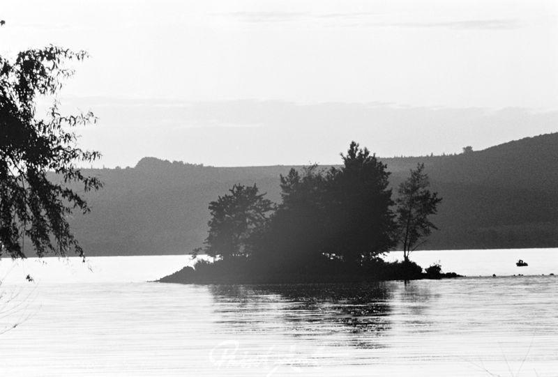 Baum auf Insel Bäume