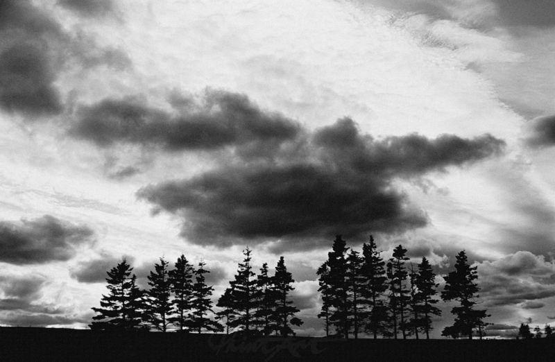 mit Sturmwolken Bäume