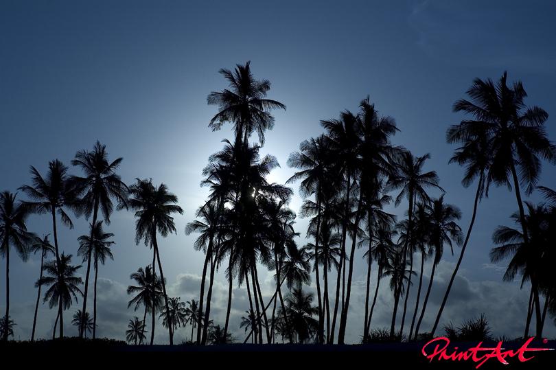 Palmen Tapeten - Vlies Tapeten