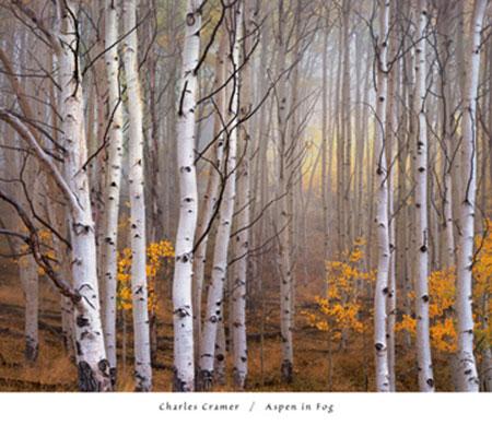 Aspen in Fog Kunstdruck Cramer Charles