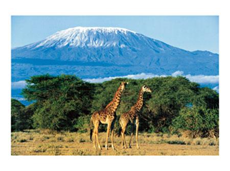 Girafes, Mont Kilimandjaro Kunstdruck Balfour Daryl
