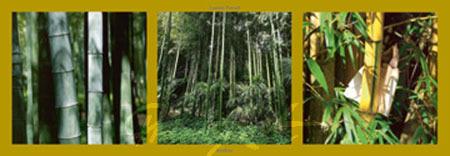 Bambous Kunstdruck Pinsard Laurent