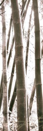 Bamboo Grove IV Kunstdruck Yan Douglas