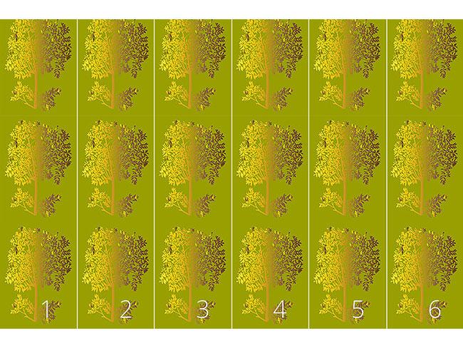 Designtapete Bäume